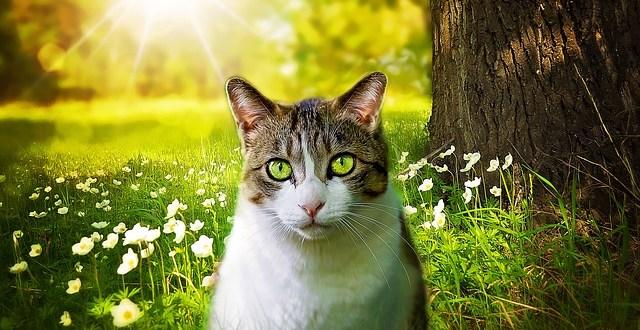 Qué es la leucemia felina