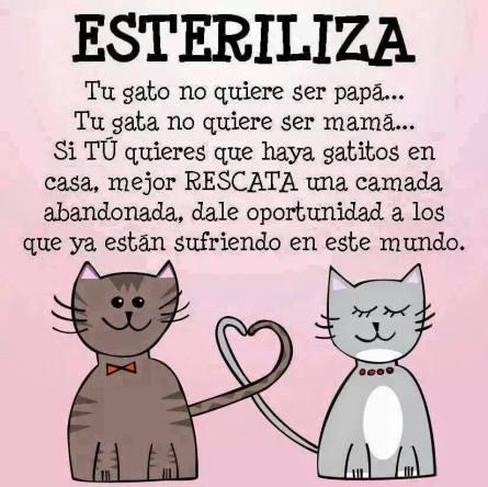 esterilización de gatos