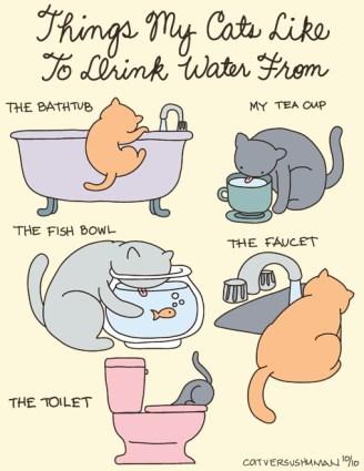 lugares donde tu gato bebe