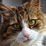 gato y ansiedad