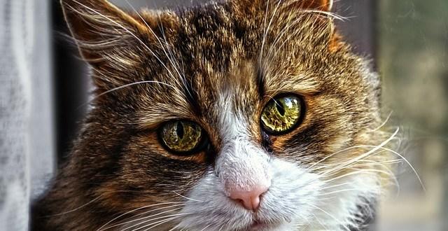 Cómo saber si tu gato sufre ansiedad