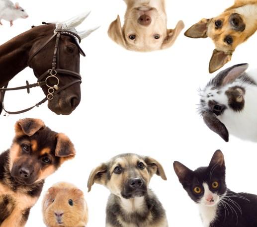 tienda de animales online