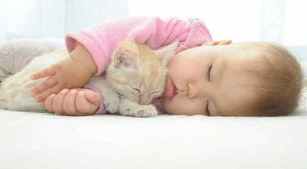 Disfruta de una feliz convivencia con tu gato y tu bebé