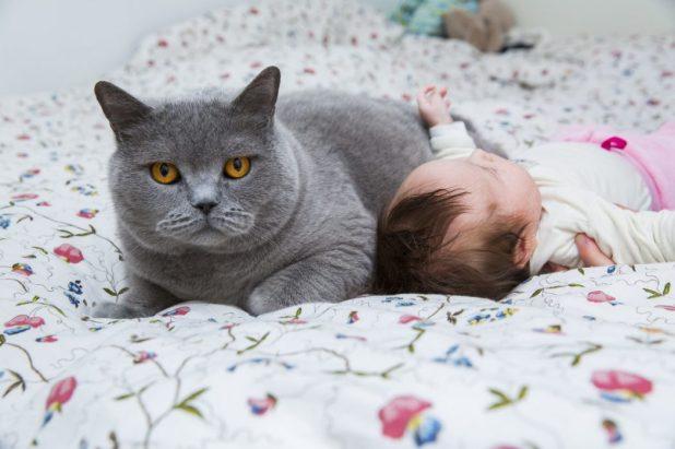 Convivencia gatos y bebés