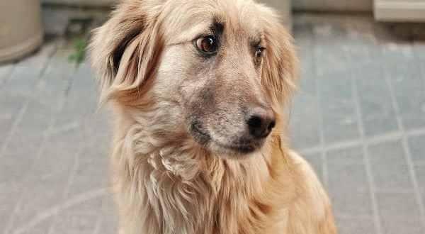 ¿Sabes qué hacer si te encuentras un perro en la calle?
