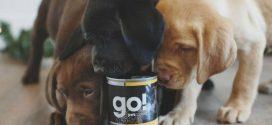 3 mitos sobre la alimentación de las mascotas