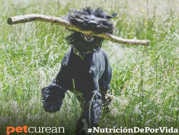 mitos alimentacion perros