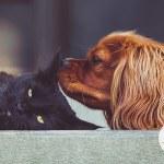 arcoiris-pets-social-9