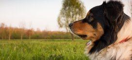 Tipos de adiestramiento canino