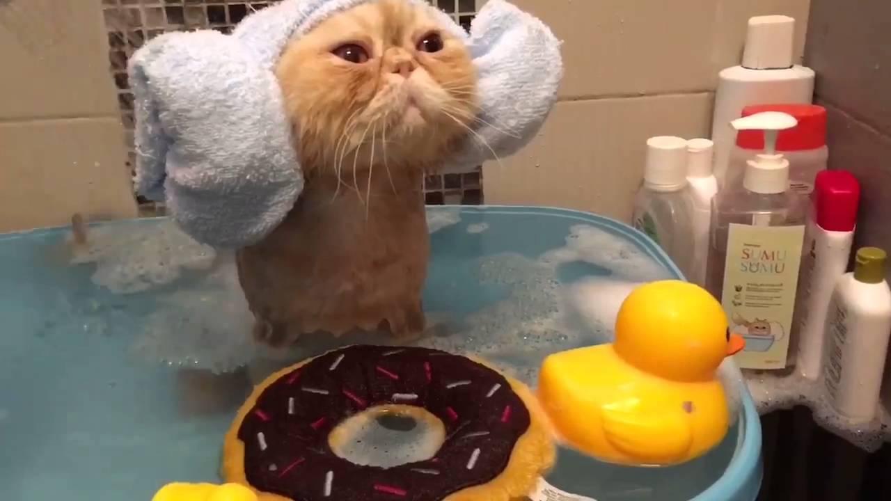 gatos tomando un baño