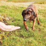 enseñar a tu perro