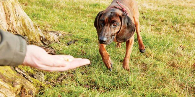 Cómo enseñar a tu perro a acudir a la llamada