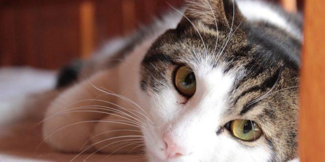 gato-no-orina