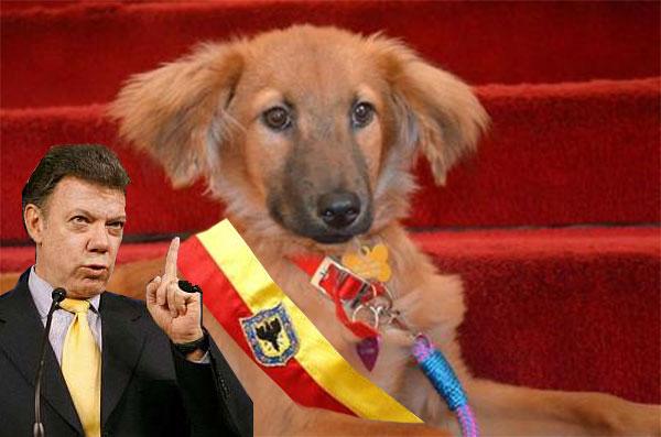 ¡Chite mugrosa!, le dijo el primer mandatario a la perrita de la Bogotá Humana.