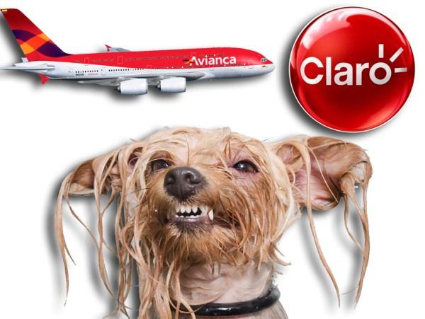 Avianca, Claro y el olor a perro mojado son las tres cosas más amadas por los colombianos según la encuesta top of mind 2014
