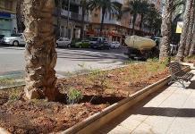 Els escocells de l'avinguda Luis Suñer s'omplin de plantes de Sàlvia