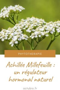 Un régulateur hormonal naturel: l'Achillée Millefeuille