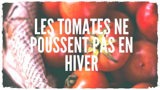 Des tomates en hiver…mûries à l'éthylène
