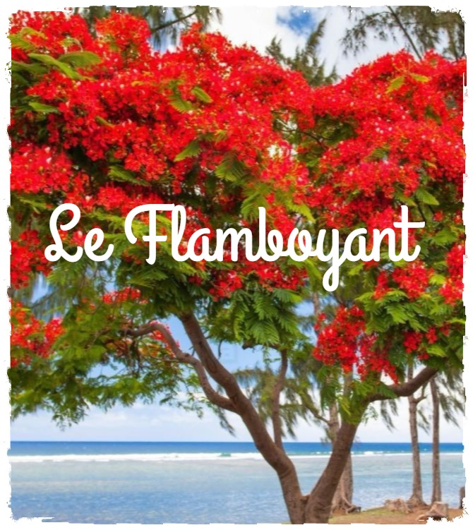 You are currently viewing Le flamboyant : l'arbre de Noël mauricien