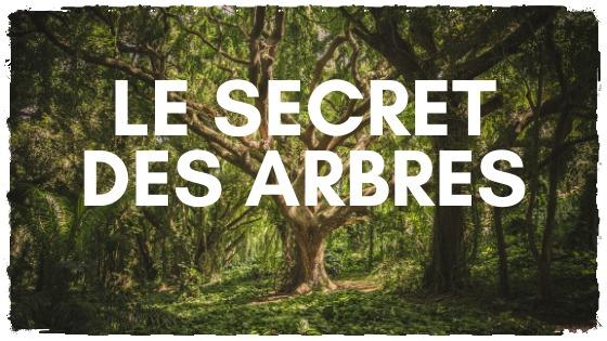 You are currently viewing Les arbres ont un secret à vous dire
