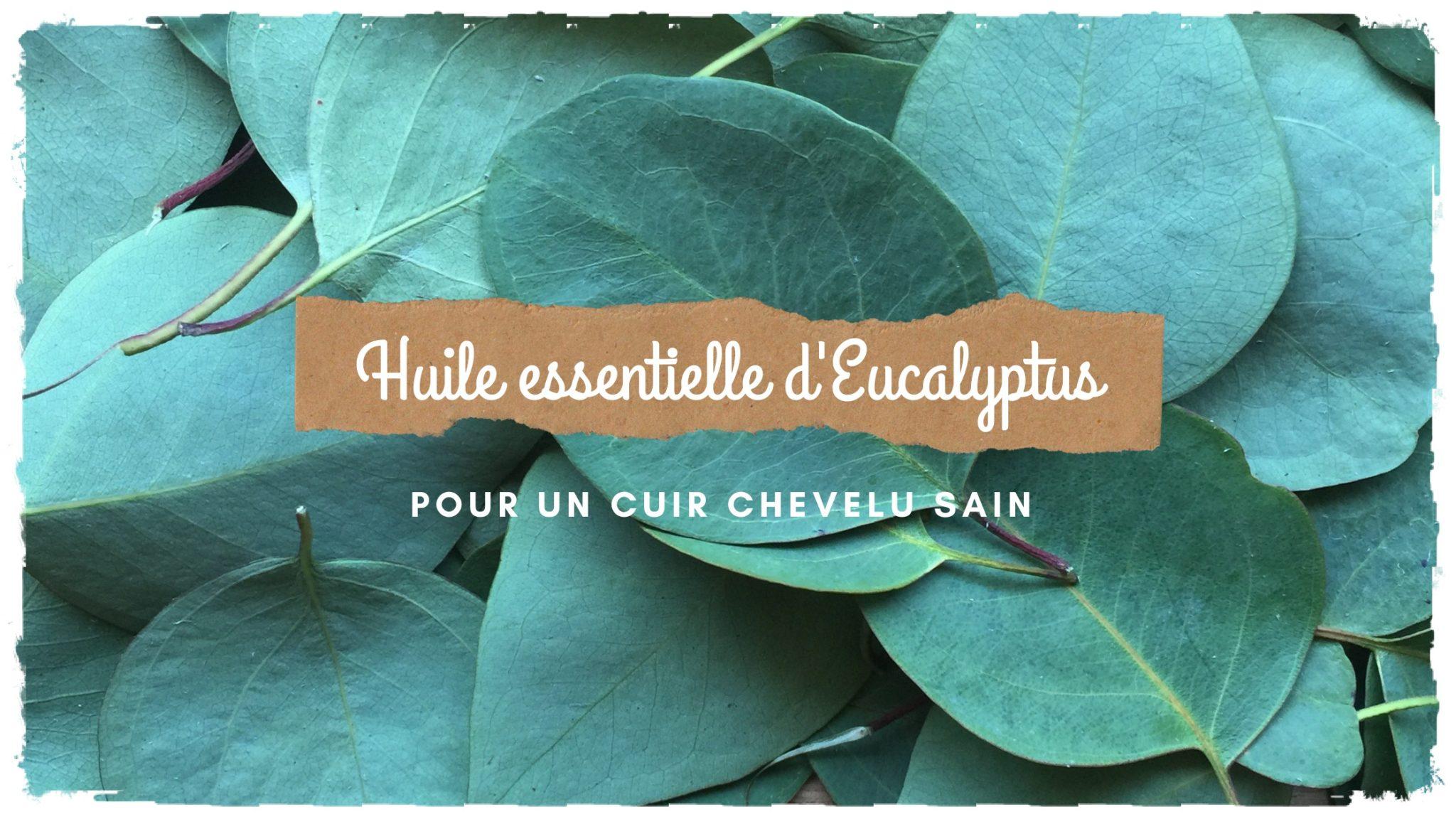 You are currently viewing Obtenir un cuir chevelu sain avec l'huile essentielle d'Eucalyptus