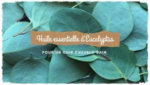 Obtenir un cuir chevelu sain avec l'huile essentielle d'Eucalyptus