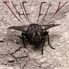 The Fly (EP)