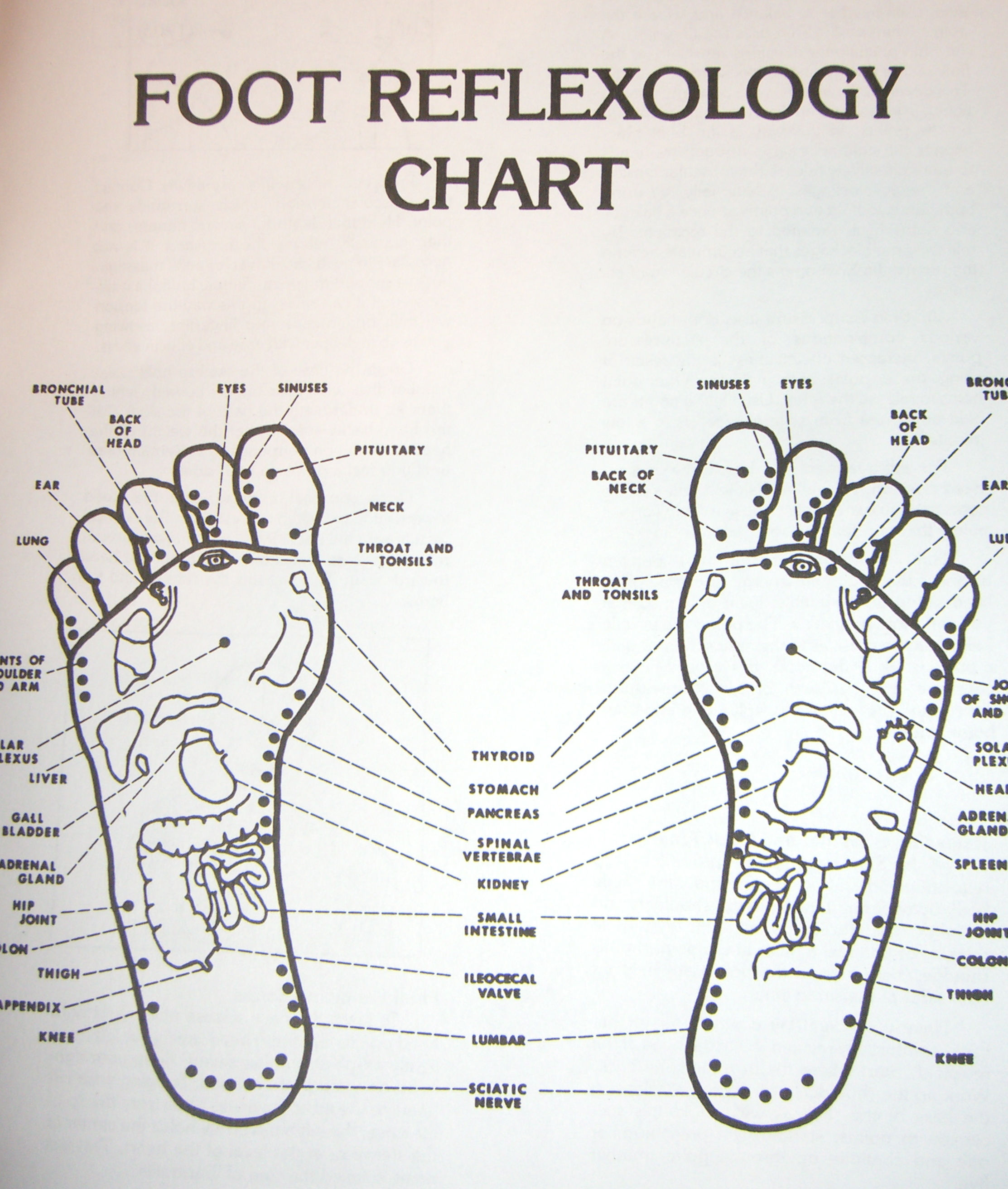 Introduction To Acupressure Points Qi Gong Self