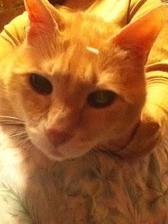 Cat Acupuncture