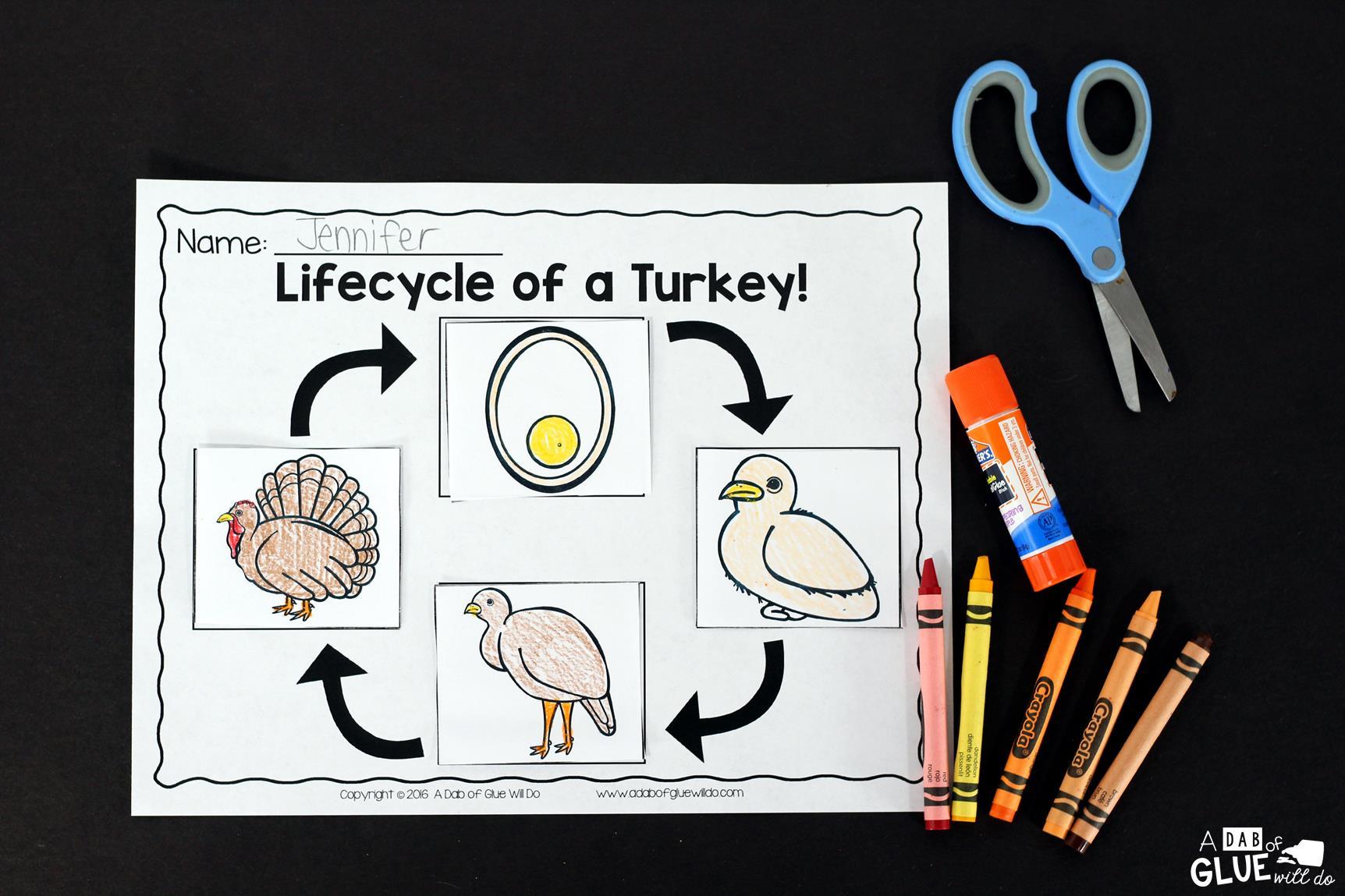 Turkeys An Animal Study