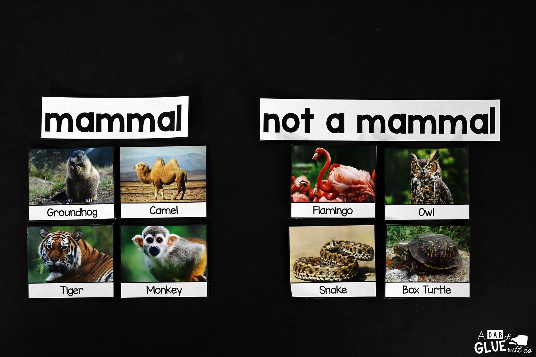 Groundhog Facts Animal Study