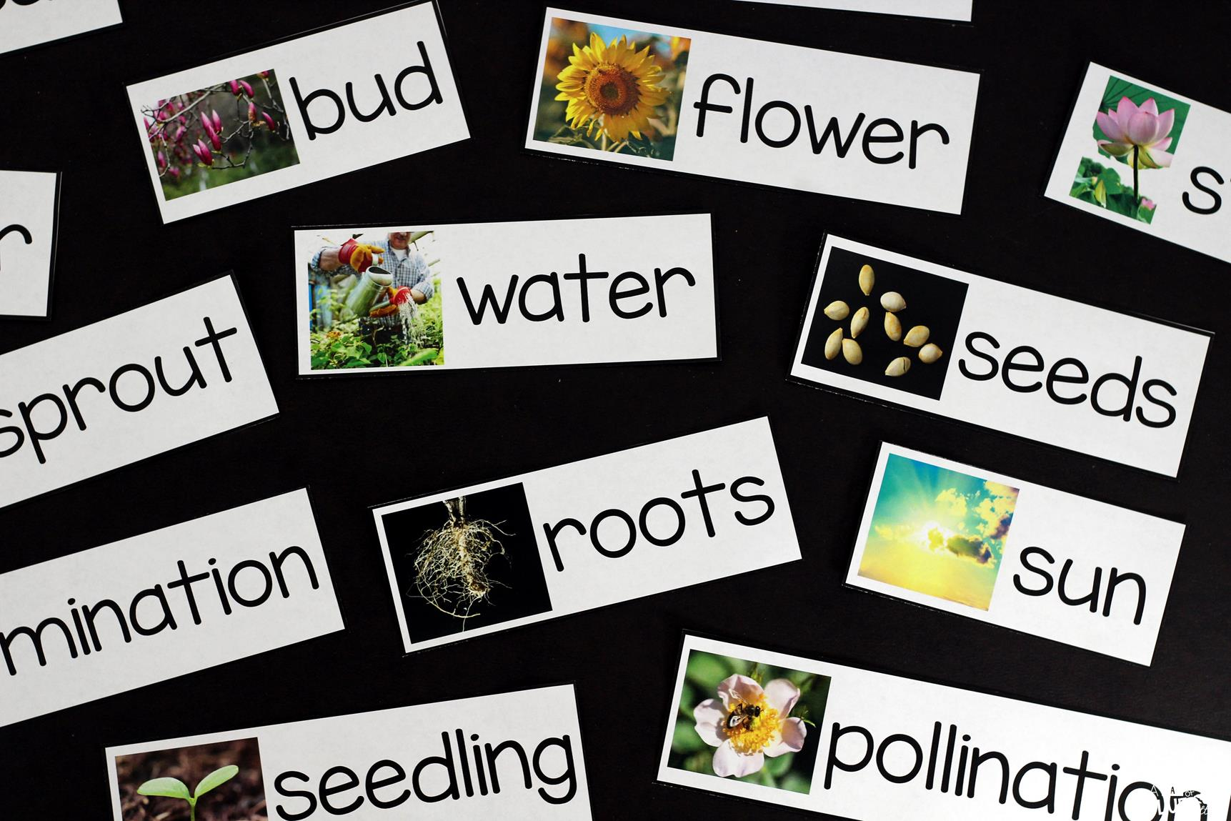 Plants Unit Powerpoint Lessons Printables