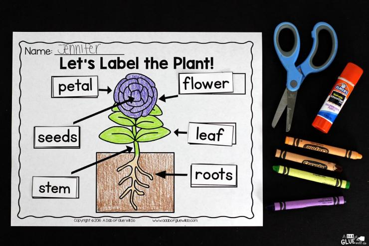 Engage your class in an exciting hands-on experience learning all about plants! Plants Unit (PowerPoint, Lessons, Printables) is perfect for science in Preschool, Pre-K, Kindergarten, First Grade, and Second Grade classrooms and packed full of inviting science activities. Students will learn about the needs of plants, parts of a plant, and the plant life cycle. This pack is great for homeschoolers, kids craft activities, and to add to your unit studies!