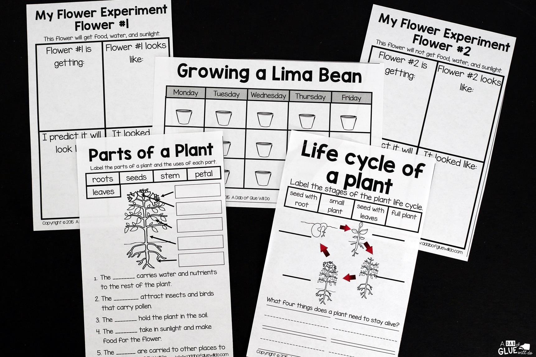 Lima Bean Clipart Worksheet Kindergarten Lima Best Free Printable Worksheets
