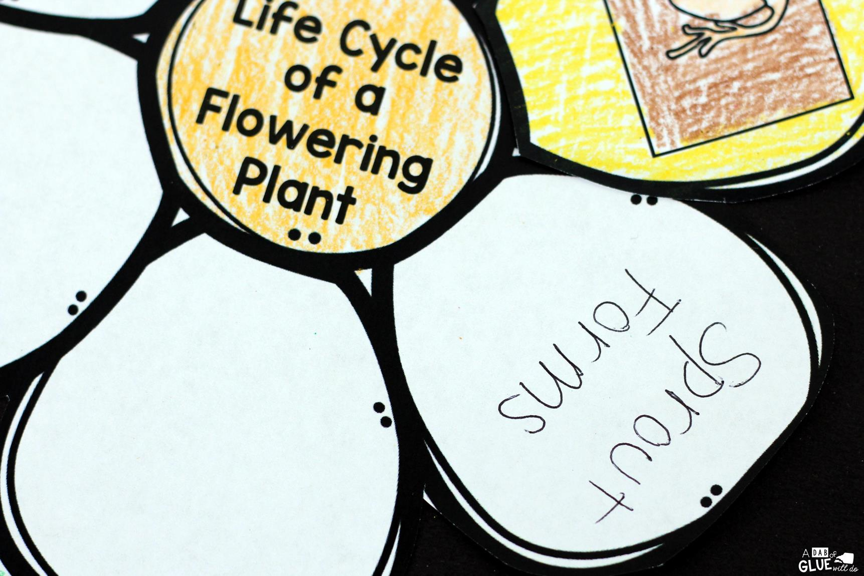Plant Life Cycle In Order Ideas For Early Childhood T Life