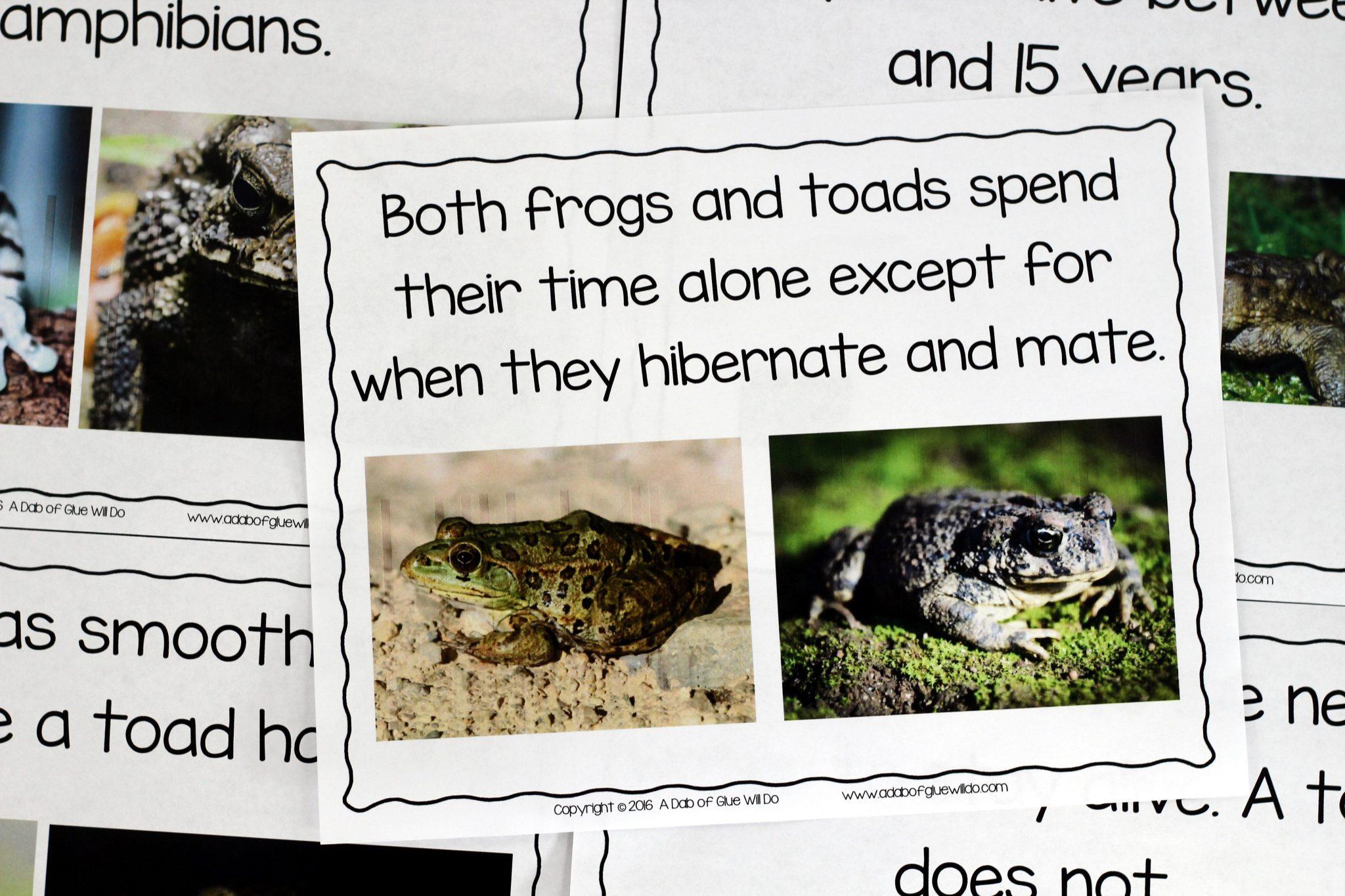 Toad Life Cycle Worksheet