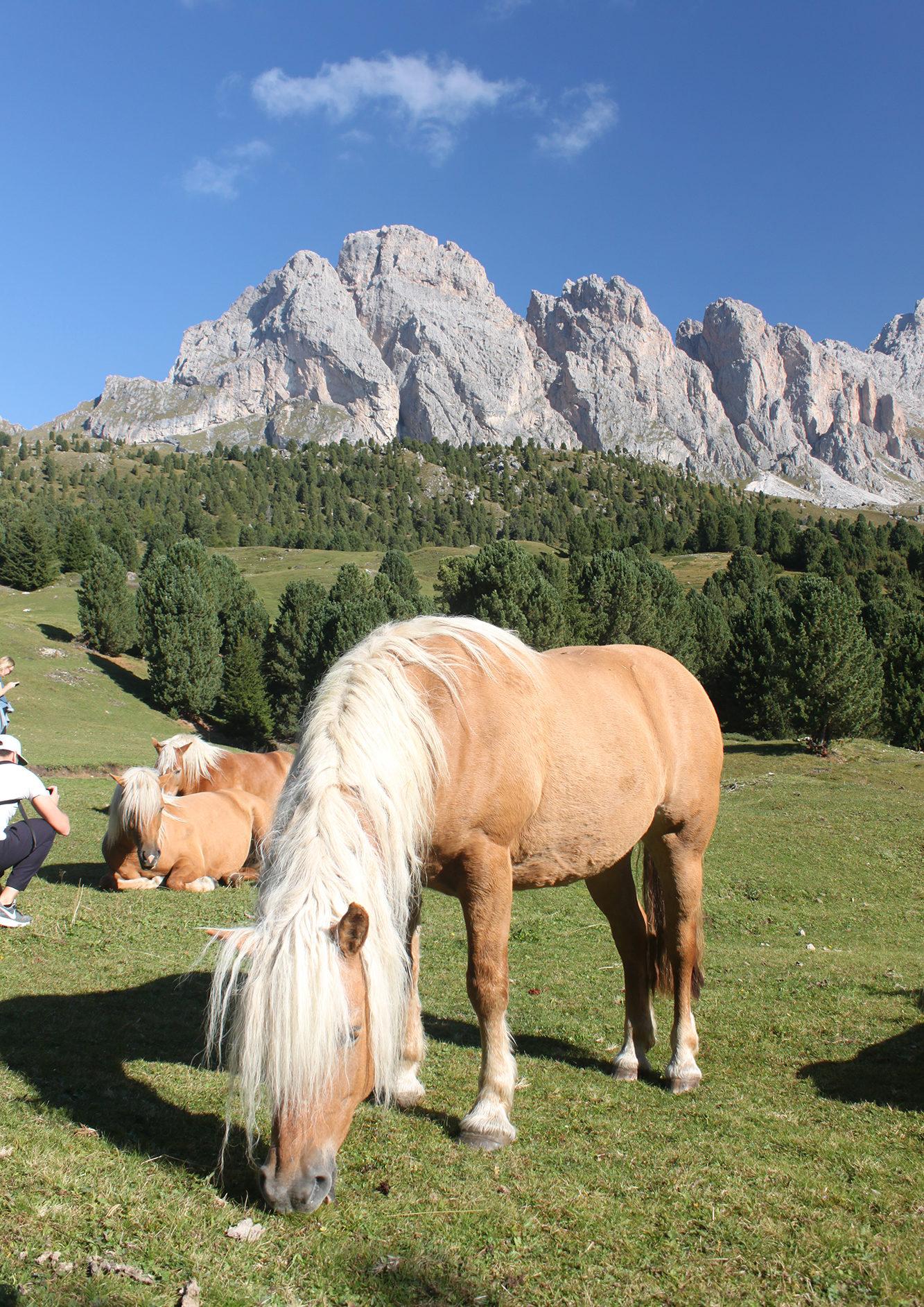 Val Gardena Horse