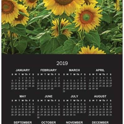 2019 Sunflower Poster Calendar