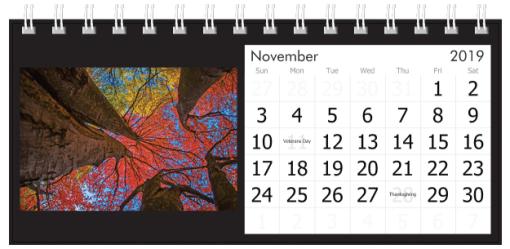 November 2019 Autumn Trees