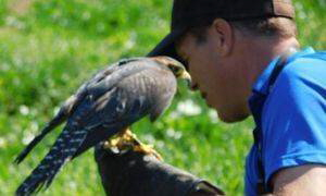 Adams Falconry Service