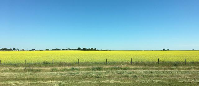 Road Trip 2017 Alberta