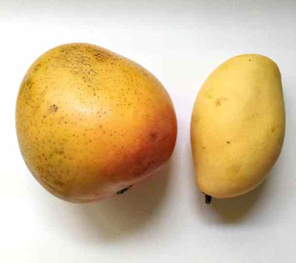 A large brown speckled yellow and orange mango on the left and a smaller slender yellow mango on the right on a white surface