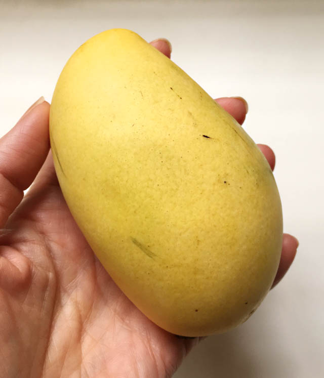 A hand holding a yellow smooth skinned mango