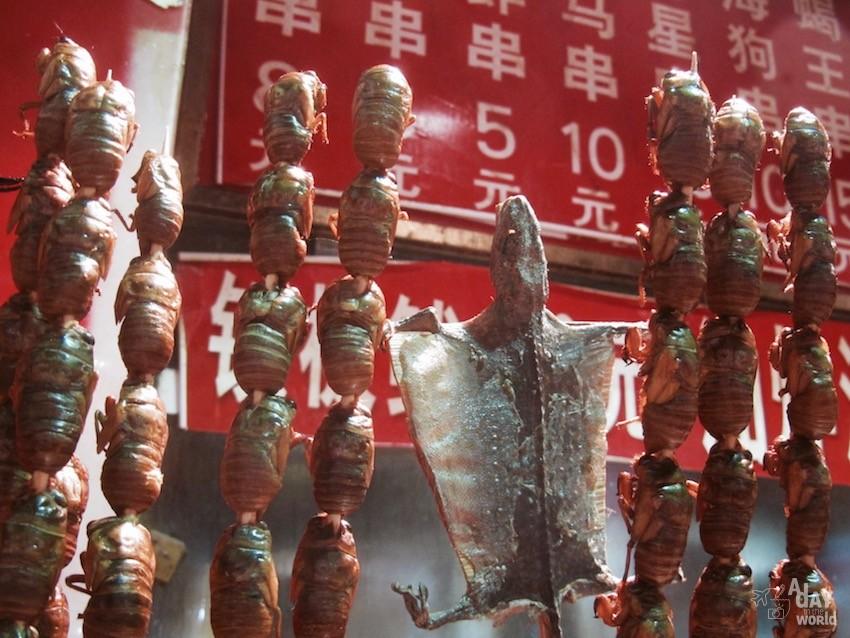 brochette larves chine pekin