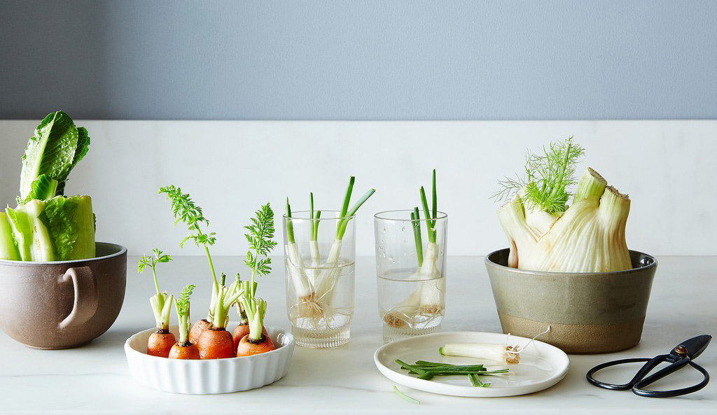 Grow Yourself A Vegetable Garden 9