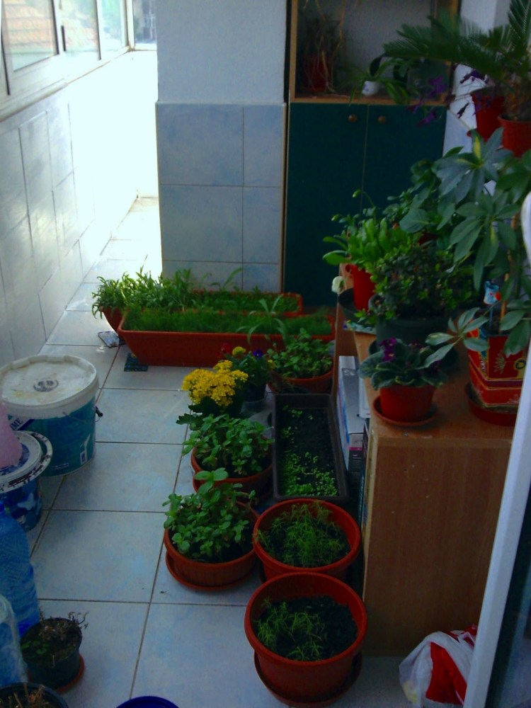 Backyard Project Chapter Small Enclosed Garden Ideas