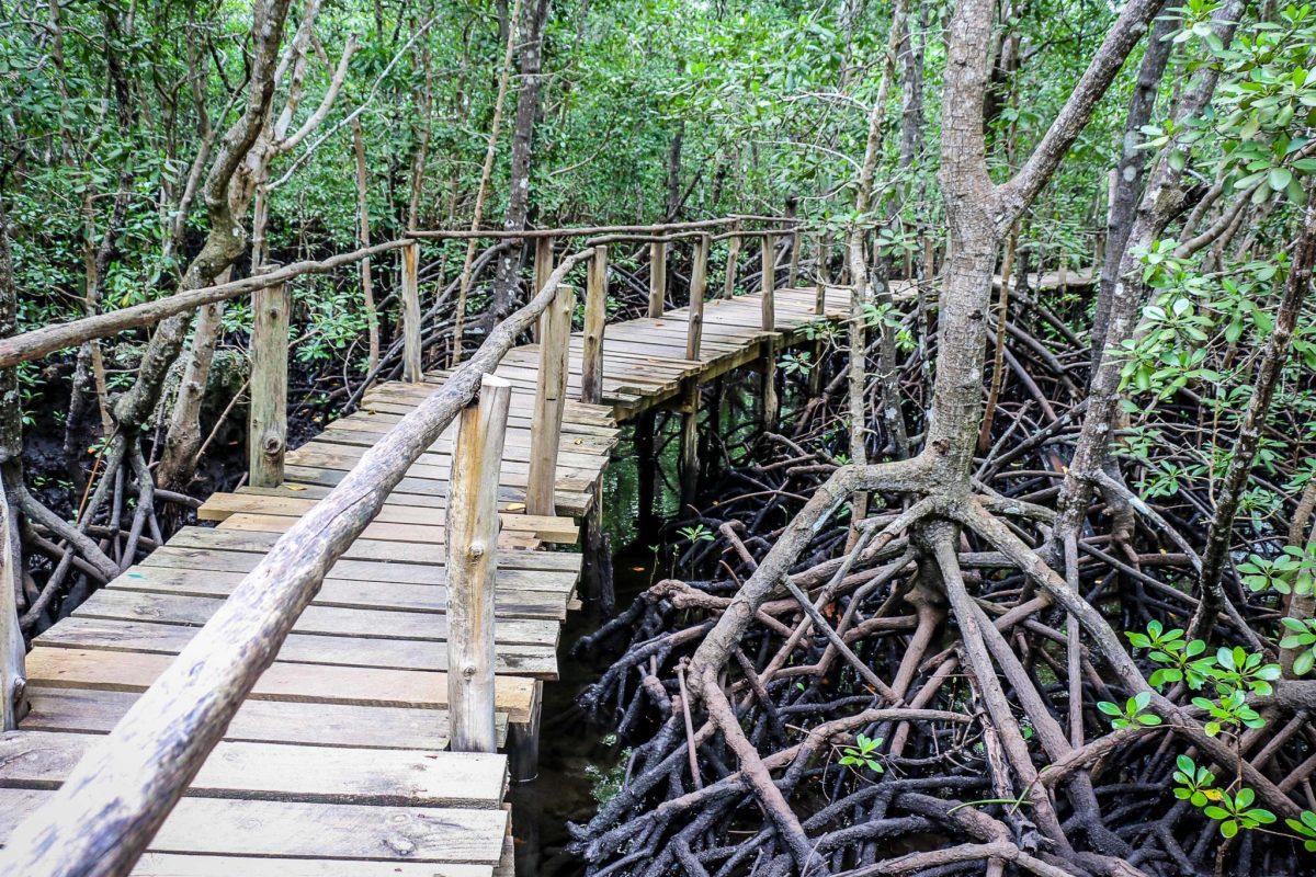 zanzibar_atrakcje_jozani_forest
