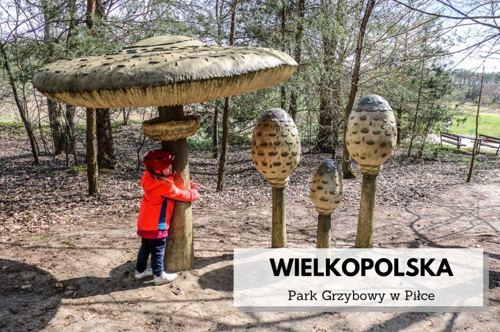 Atrakcje_wielkopolski_park_grzybowy_w_pilce