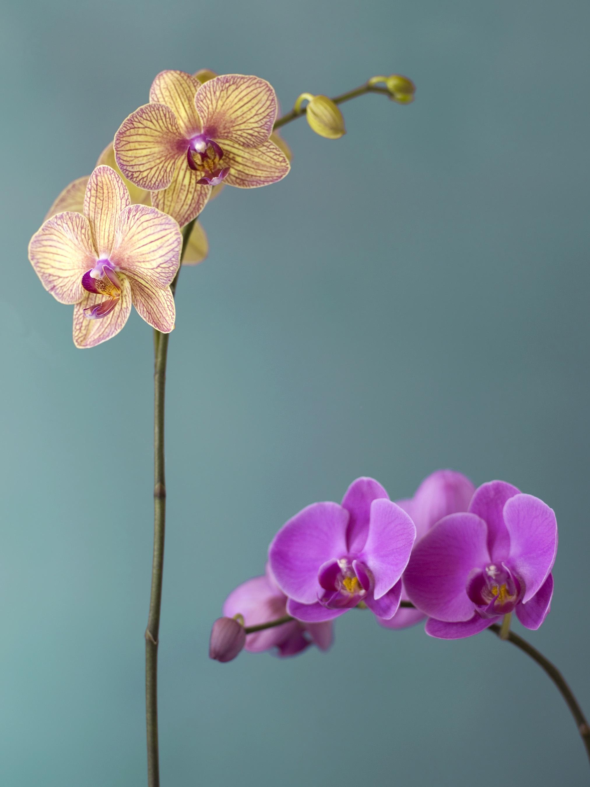http://en.wikipedia.org/wiki/Orchidaceae