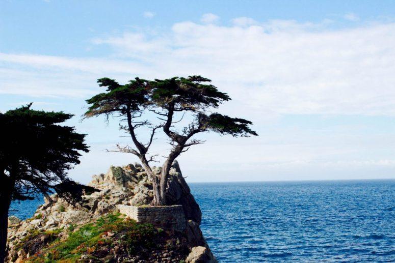 Lone Cyprus 17 Mile Drive Pebble Beach